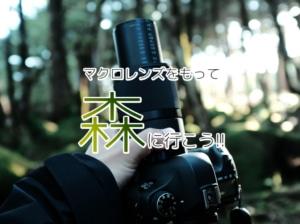 【マクロレンズの使い方】マクロレンズを持って森にいこう!カミソリマクロで撮影散策【SIGMA 70mm F2.8...